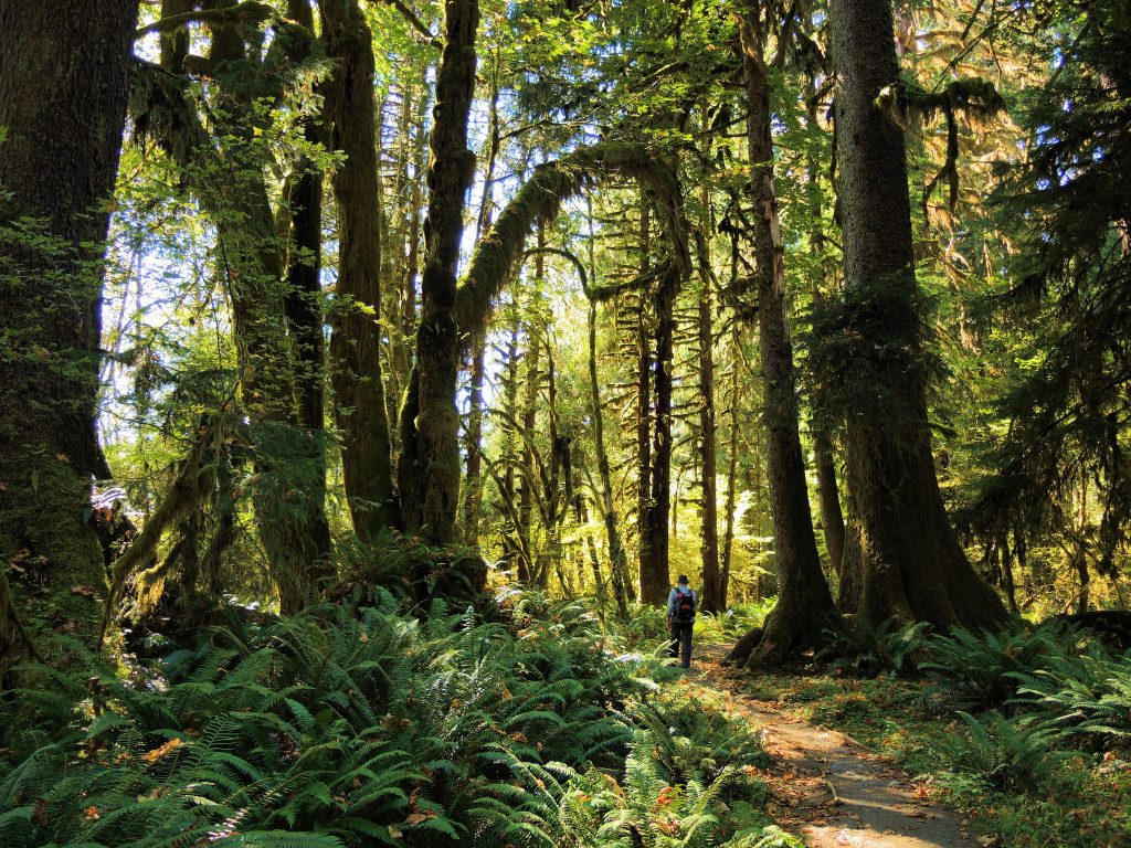 Hoh River Trail walking adventure