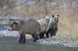 Fishing Branch River - Bear Cave Mountain arctic canada