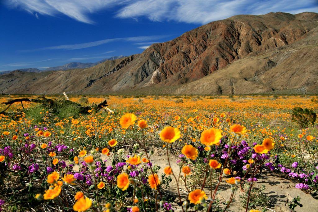 Anza Borrego, Desert State Park, Colorado Desert, Southern California, United States of America
