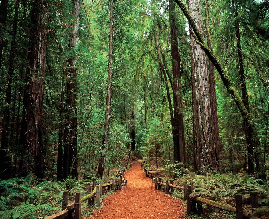 Sonoma armstrong woods, United States of America