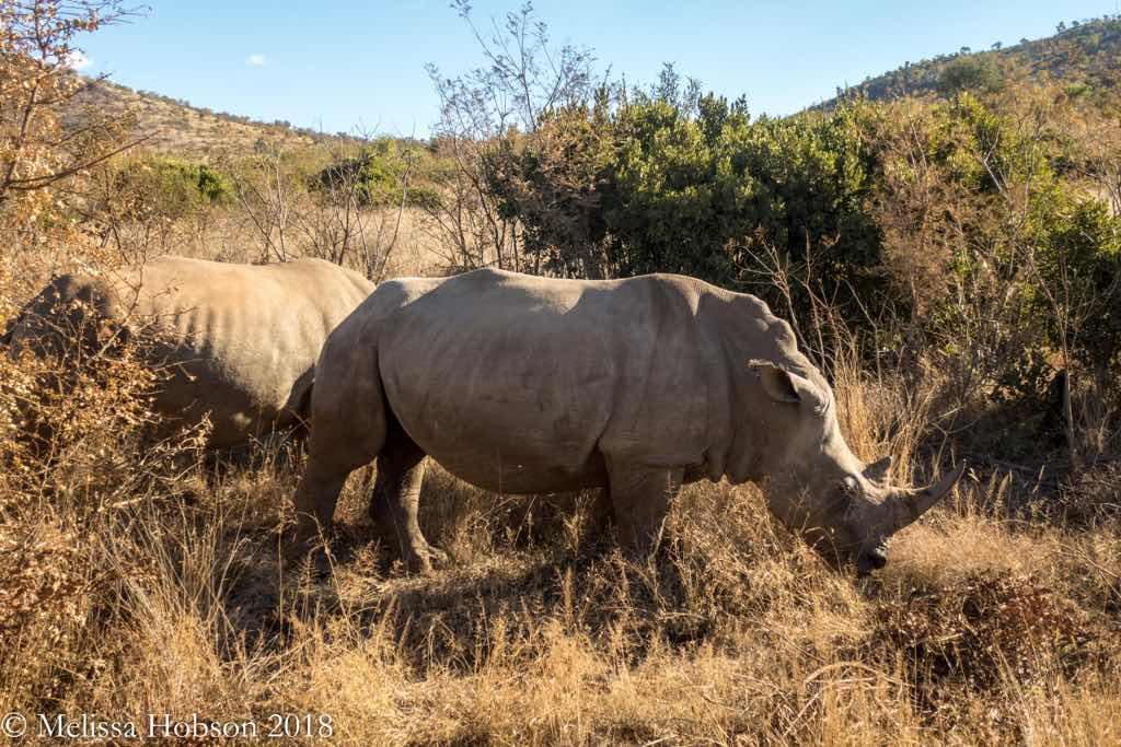 South Africa, African Safari Johannesburg, Pilanesberg, Melissa Hobson