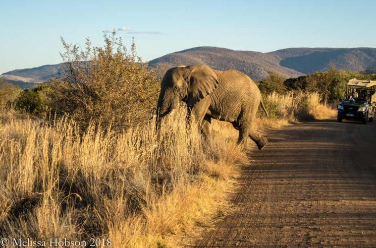 How to Plan The Ultimate African Safari