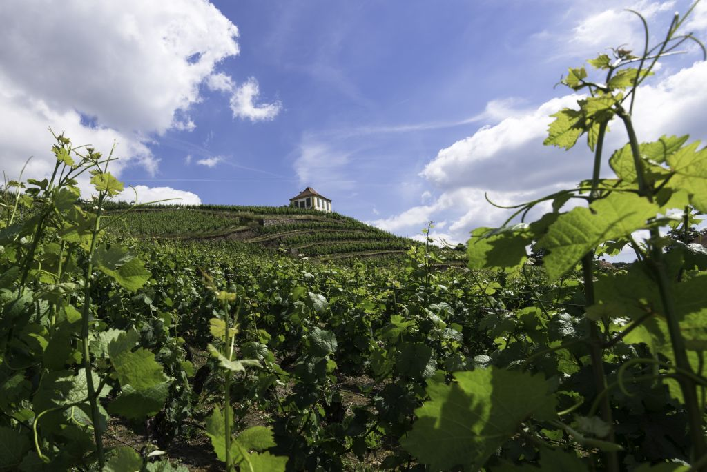 germany wine region Vinyards in Seusslitz_2_copyrifht Anita Demianowicz (1) - 1024 x 684