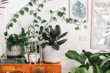 air cleaning plants Air Purifying Plants