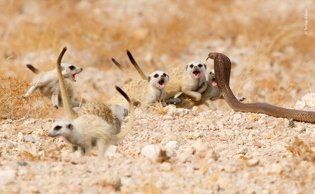 © Tertius-A-Gous - Wildlife Photographer of the Year - 1024 x 631