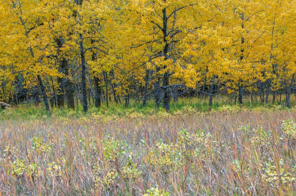 Fish Creek Provincial Park Calgary