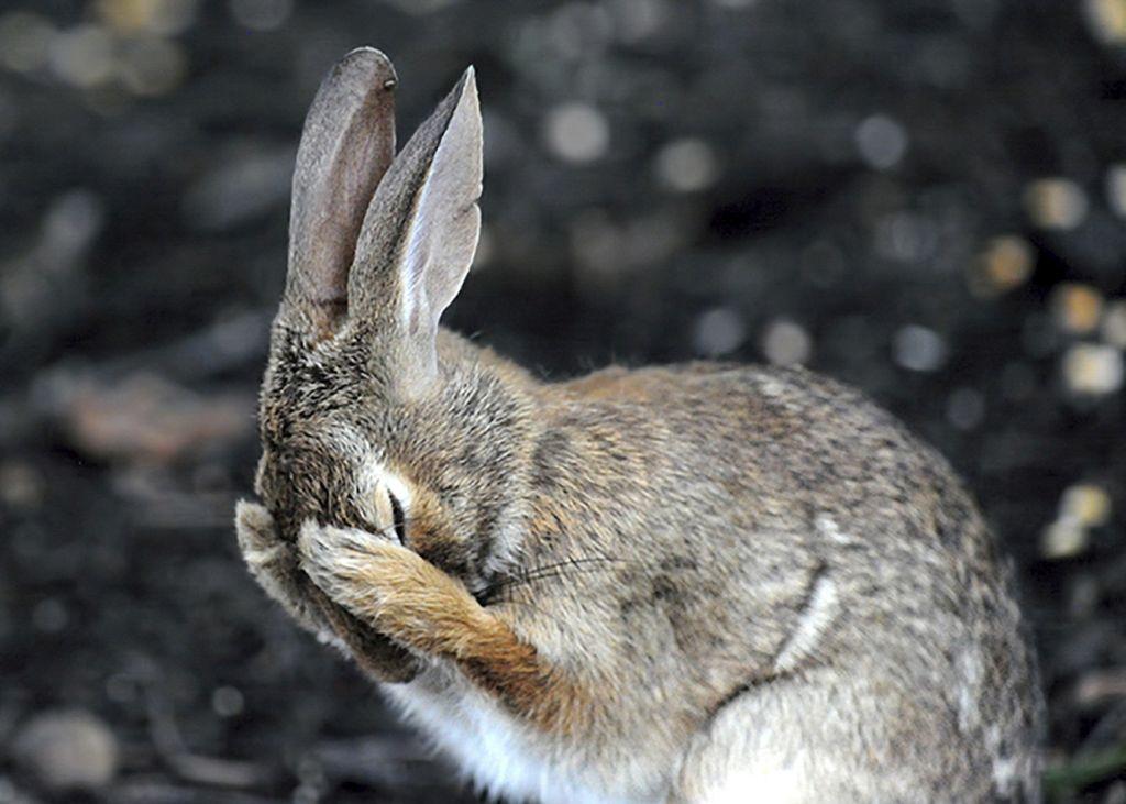 Daniel-Friend_Rabbit-hiding-face-in-embrassment - 1024 x 731