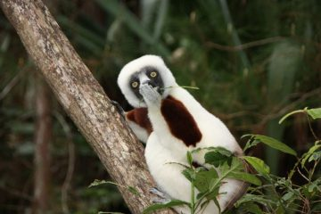 Madagascar trip Jakob-Strecker_Astonished-Lemur - 1024 x 683