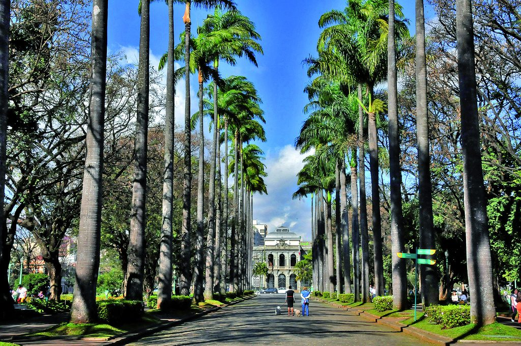 Imperial palm trees, blue sky, two people Praca da Liberdade in Minas Gerais, Brazil