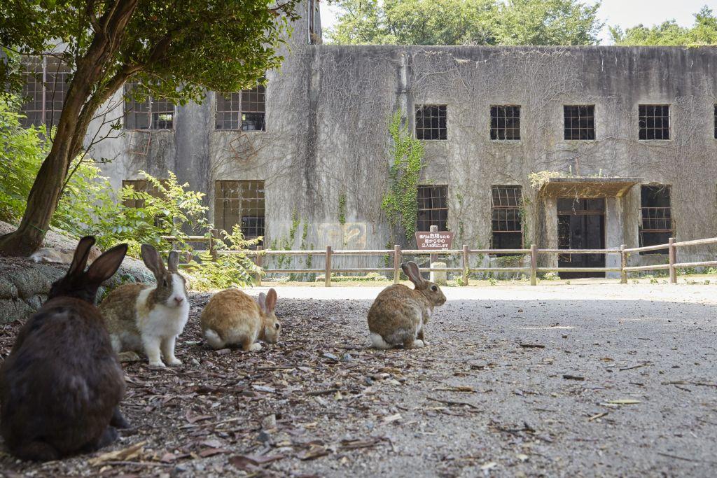 Japan - rabbit island