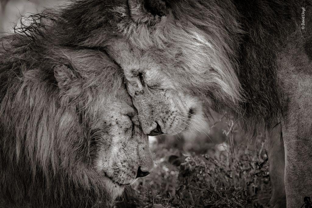 Wildlife Photographer of the Year-David-Lloyd - 1024 x 684