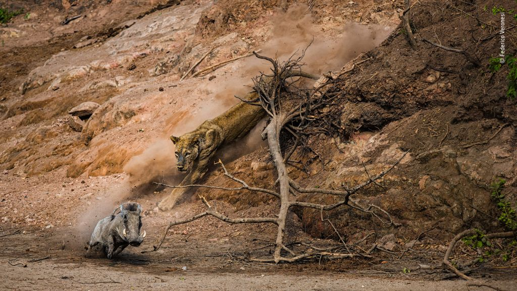 Wildlife Photographer of the Year-Federico-Veronesi - 1024 x 576