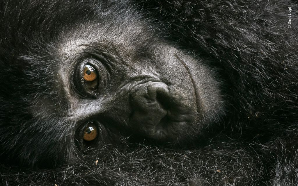 Wildlife Photographer of the Year-David-Lloyd - 1024 x 640