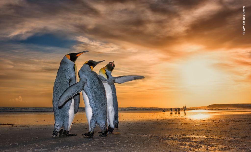 Wildlife Photographer of the Year-Wim-Van-Den-Heever - 1024 x 622