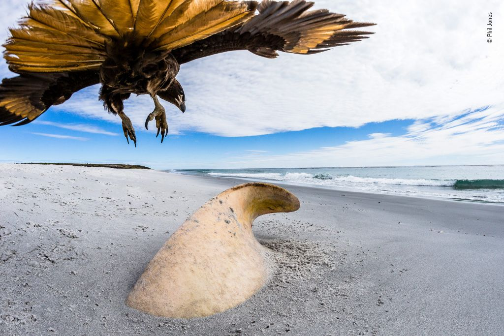 Wildlife Photographer of the Year-Phil-Jones - 1024 x 683
