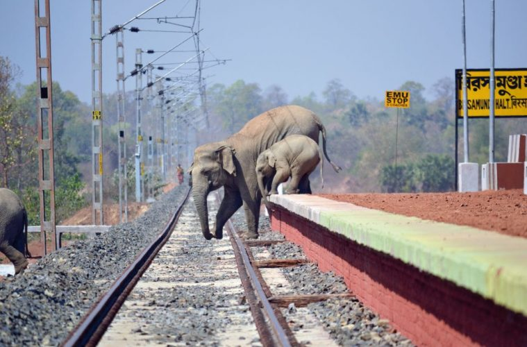 COF_45_Biplap Hazra_Elephant_Coridoor_Railway_Bishnupur, Bankura, West Bengal_DSC_0509_C - Sanctuary Wildlife Photography Awards 2018