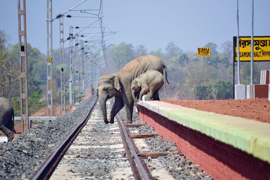 COF_45_Biplap Hazra_Elephant_Coridoor_Railway_Bishnupur, Bankura, West Bengal_DSC_0509_C - 1024 x 683