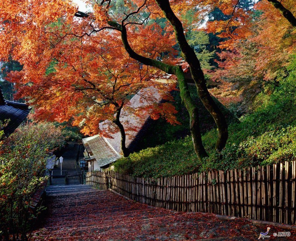 Daikozenji Temple, Saga
