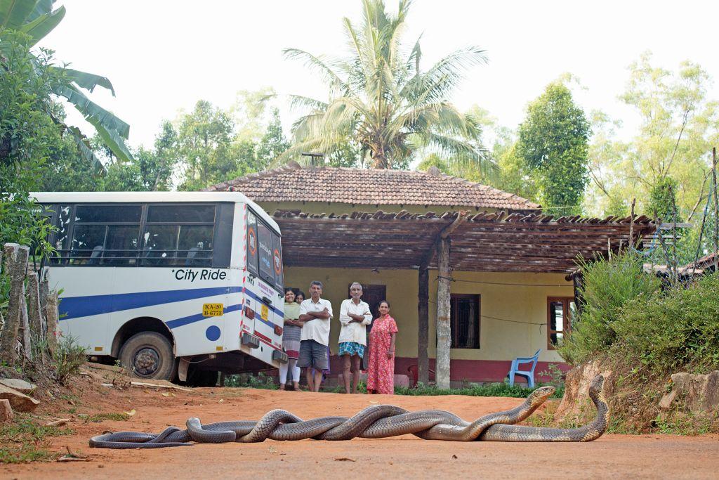HM_Abhishek Shirsat_King Cobra Combat_People_Agumbe, Karnataka_IMG_9329_C - 1024 x 683