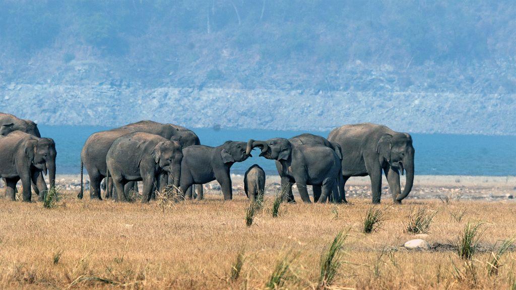 HM_Naturographers (Karthick Kumar)_Elephant_Corbett_DSC0747_C - 1024 x 577