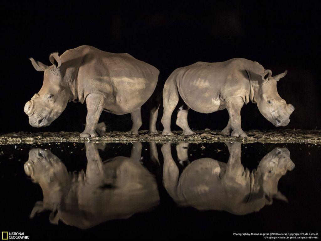 Nat Geo rhino