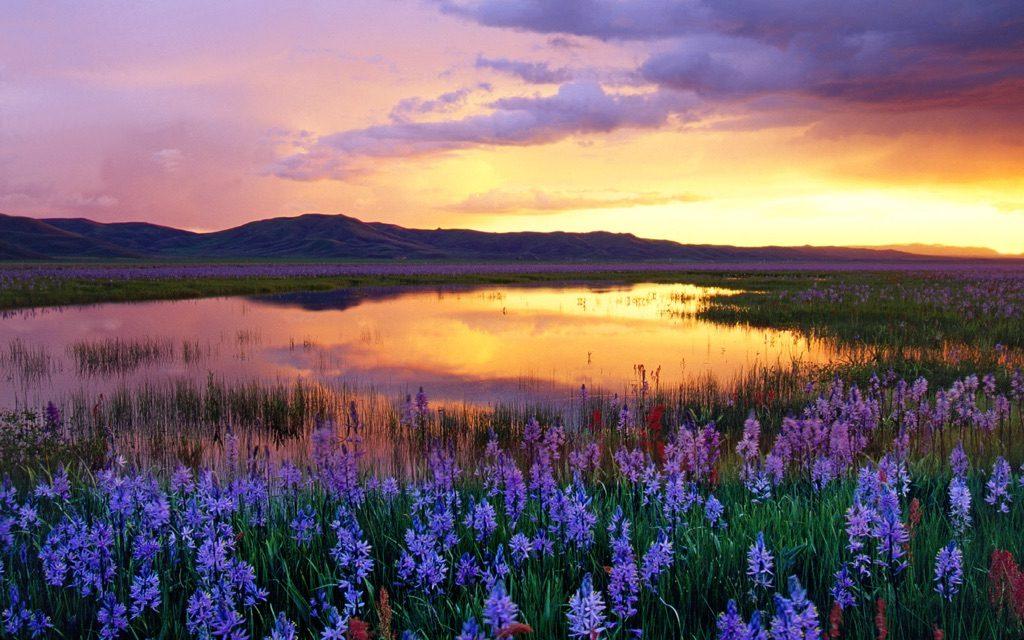 Camas Prairie, Idaho