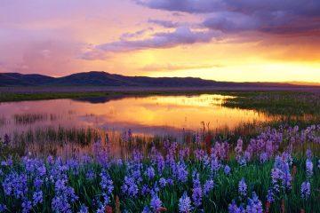 Camas Prairie, Idaho US trip