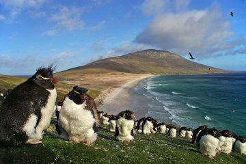 penguins falkland islands wildlife vacation