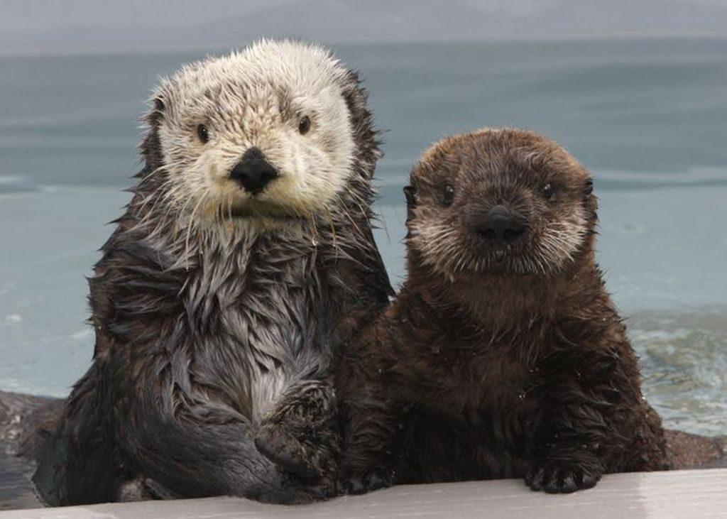 sea otters california romantic California getaways