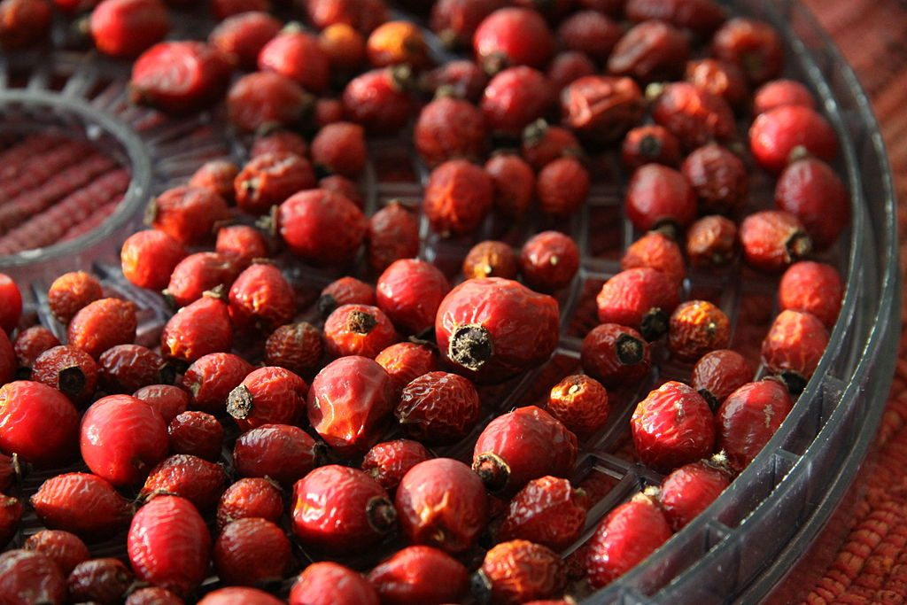 Dried Rose Hips for Tea