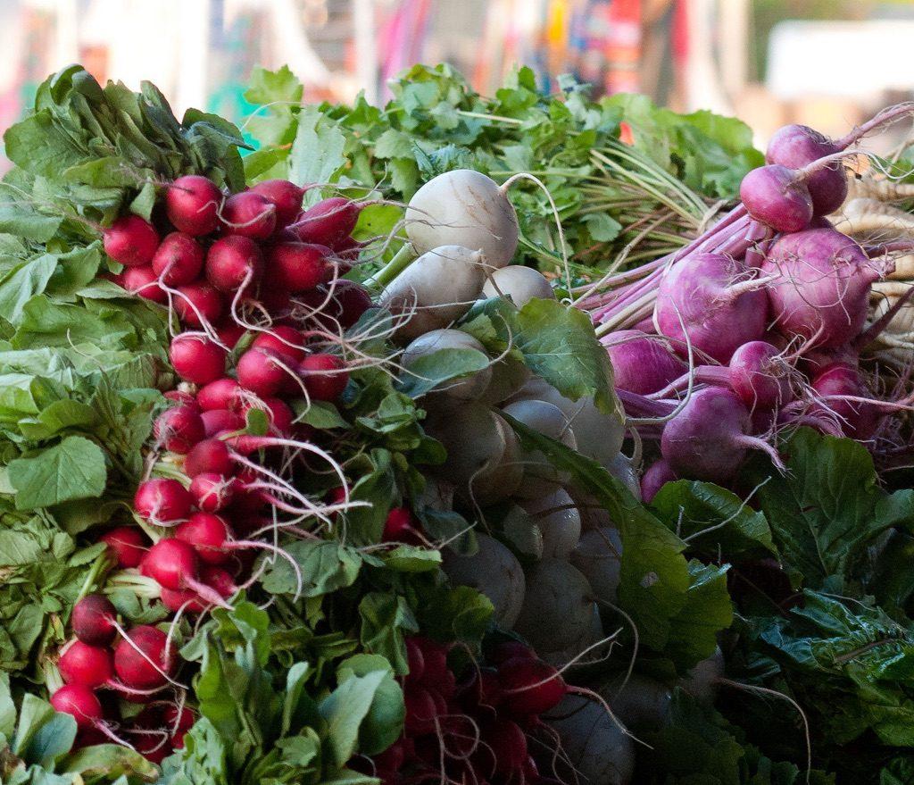 Freshly picked radishes Saturday Morning Market in St. Petersburg