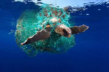 EDUARDOACEVEDO - caretta turtle Underwater Photographer of the Year 2019