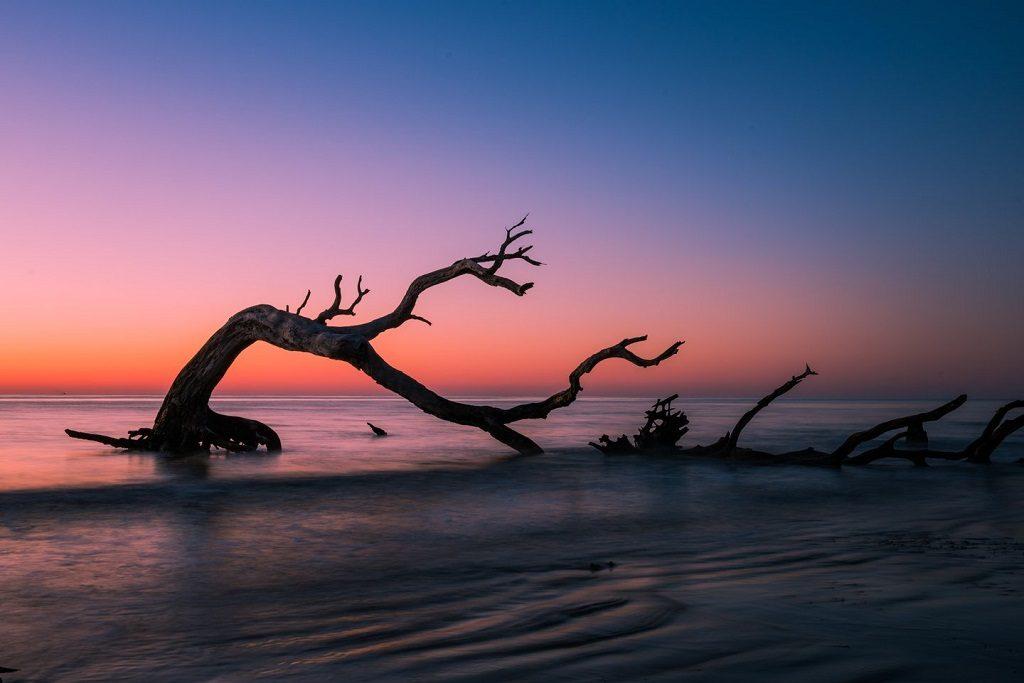 driftwood beach jekyll island georgia