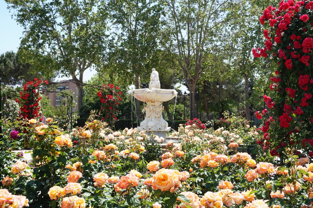 Rose Garden, Spain