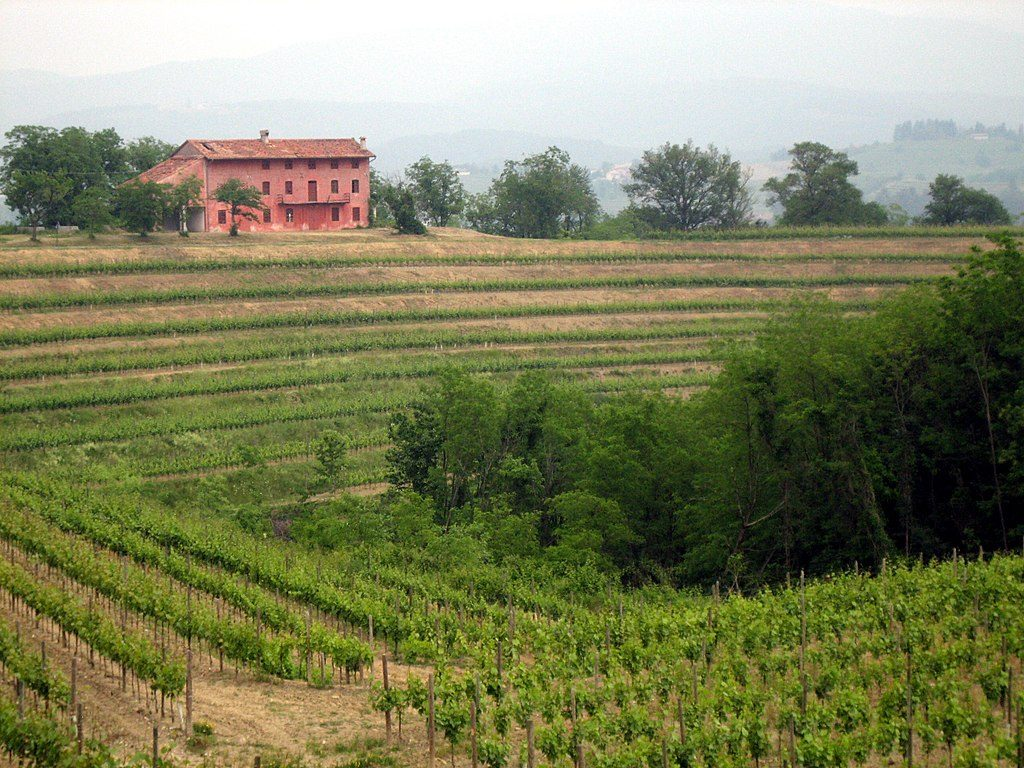 Northeast Italian wine region of the Friuli-Venezia Giulia.