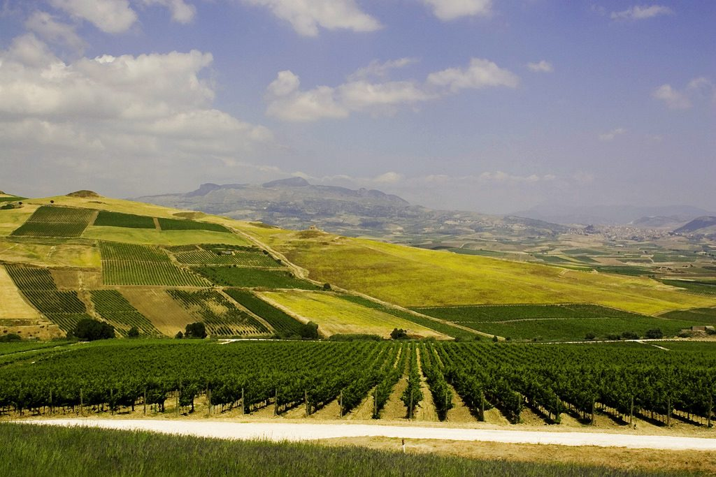Sicily, Italy Vineyards