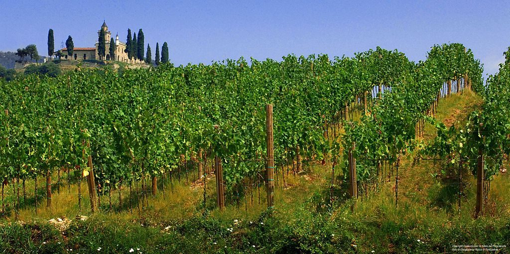 Franciacorta vineyard in Italy