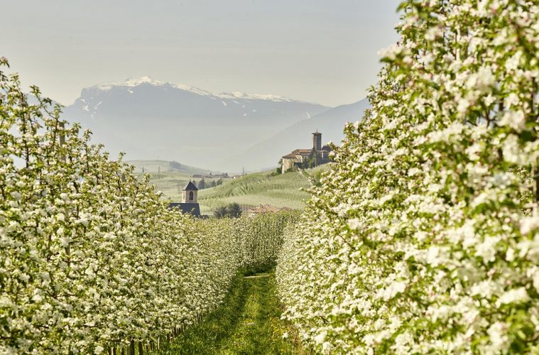 Dolomites in Bloom: Top things to do in Trentino, Italy