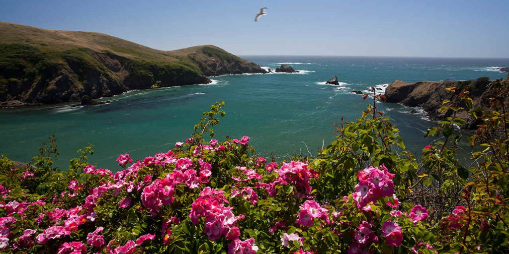 Mendocino Coast Botanical Gardens, California, USA