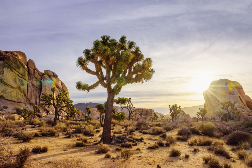 Hidden Valley, Joshua Tree National Park, California