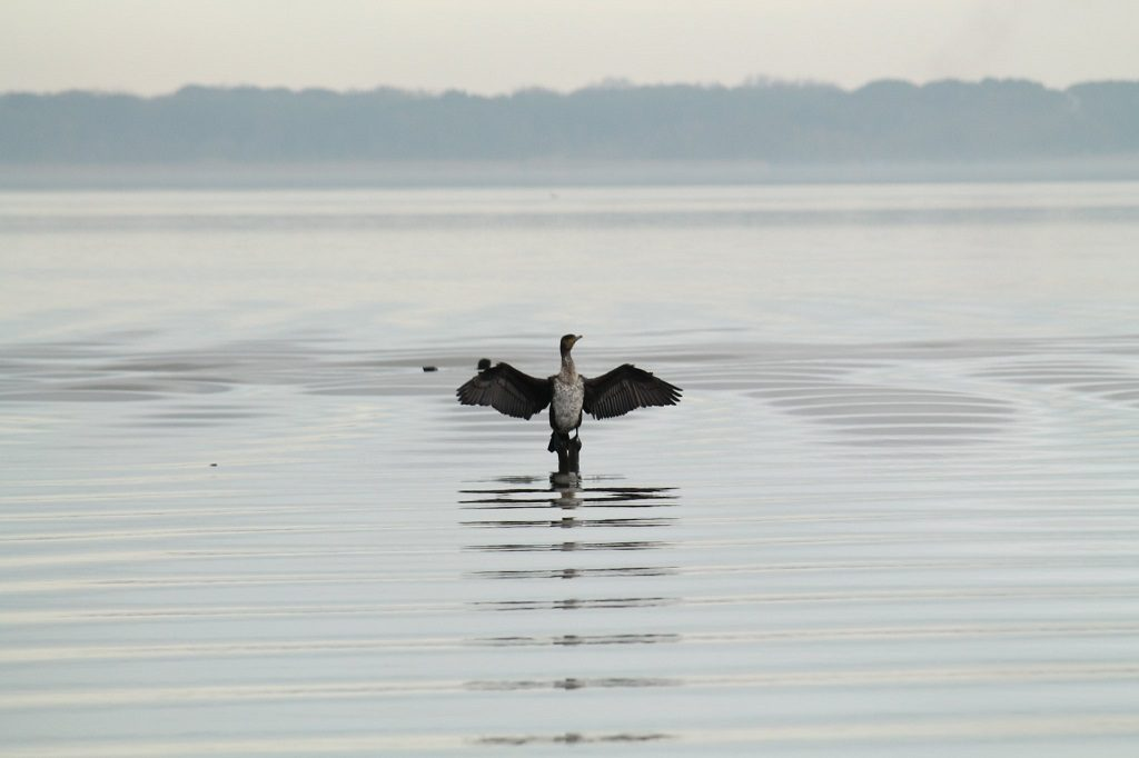 Lake Massaciuccoli italy birdwatching