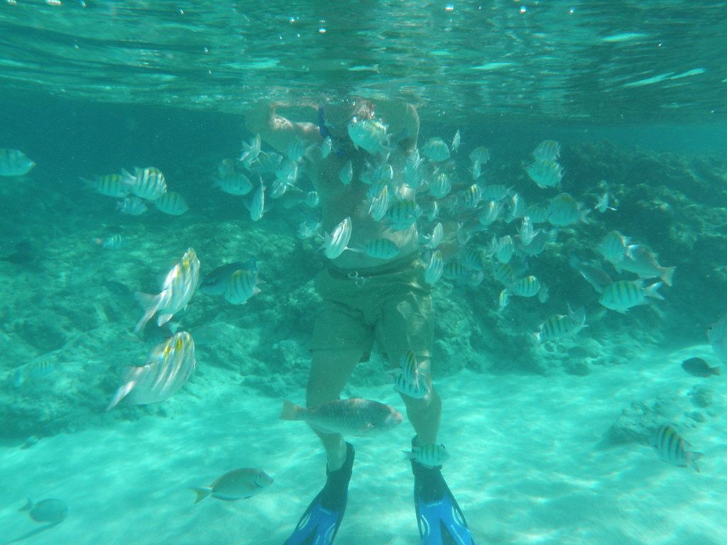 Man snorkeling with fish swarming around him