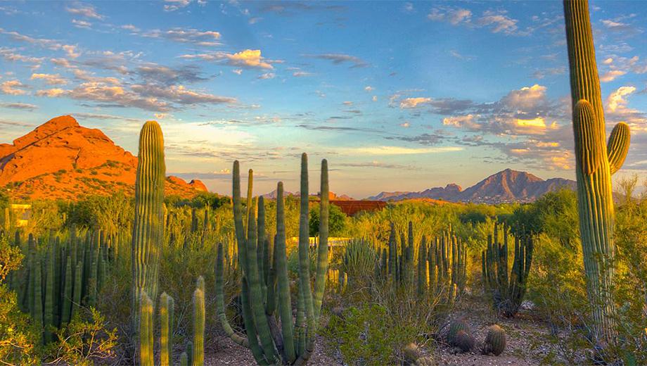 Desert Botanical Garden, Phoenix, Arizona