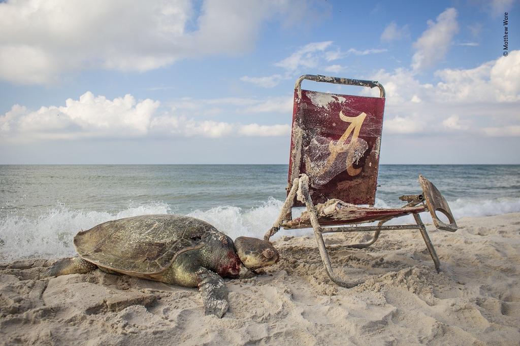 © Matthew Ware - Wildlife Photographer of the Year