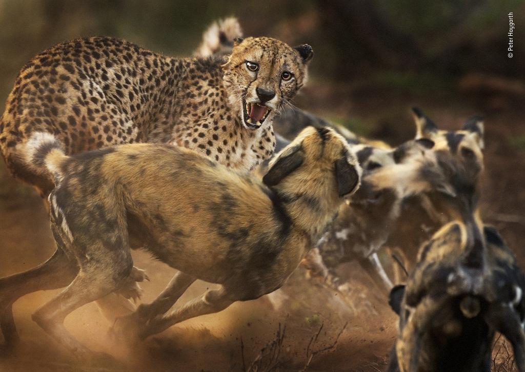 © Peter Haygarth - Wildlife Photographer of the Year