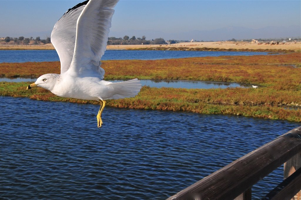 Bolsa Chica Wetlands, Huntington Beach 1 california