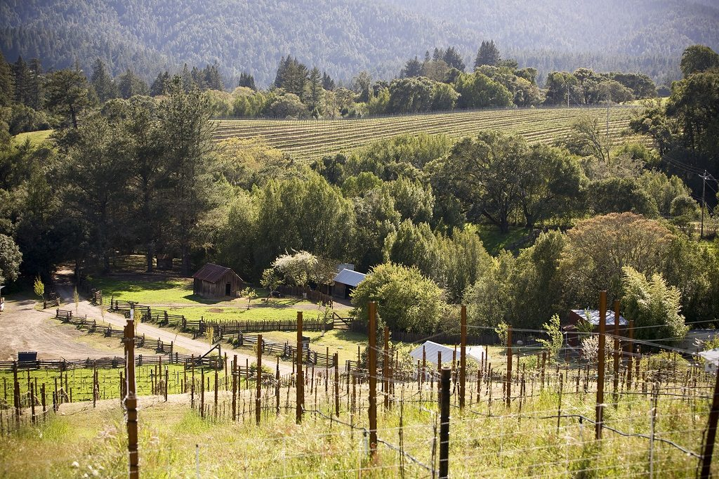 Lazy Creek Vineyard, Anderson Valley, California