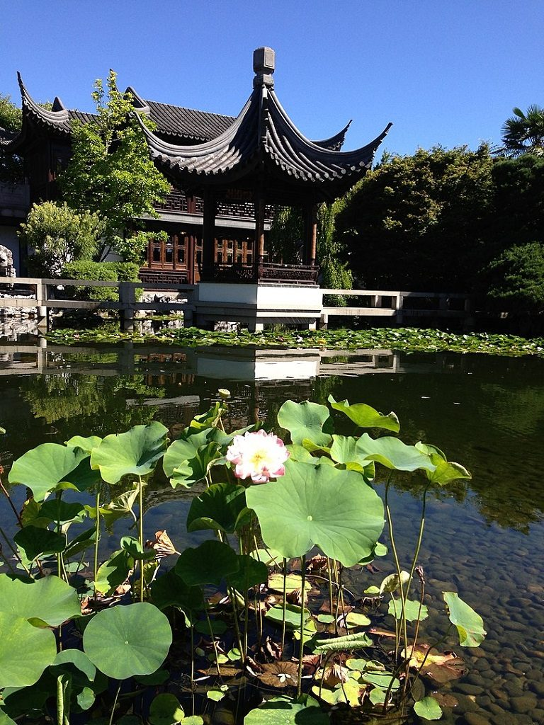 Lan su chinese garden portland lotus flower andrew parodi