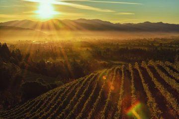 California Napa valley best California wine regions