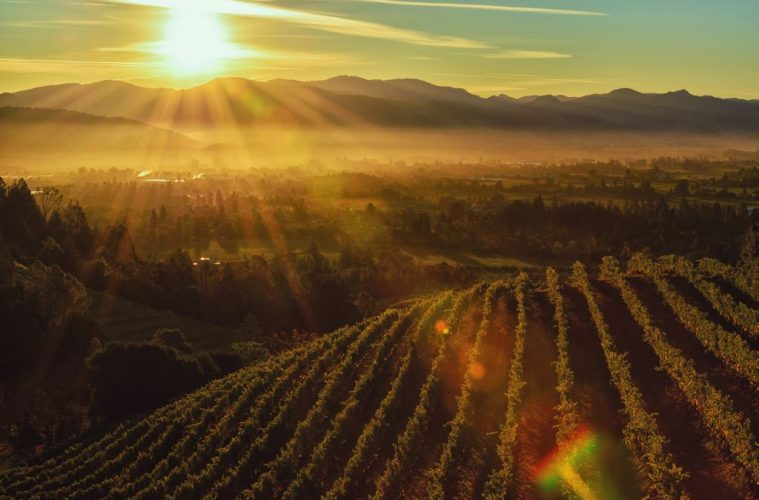 California Napa valley best California wine regions
